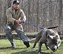 tank xl bully pitbull