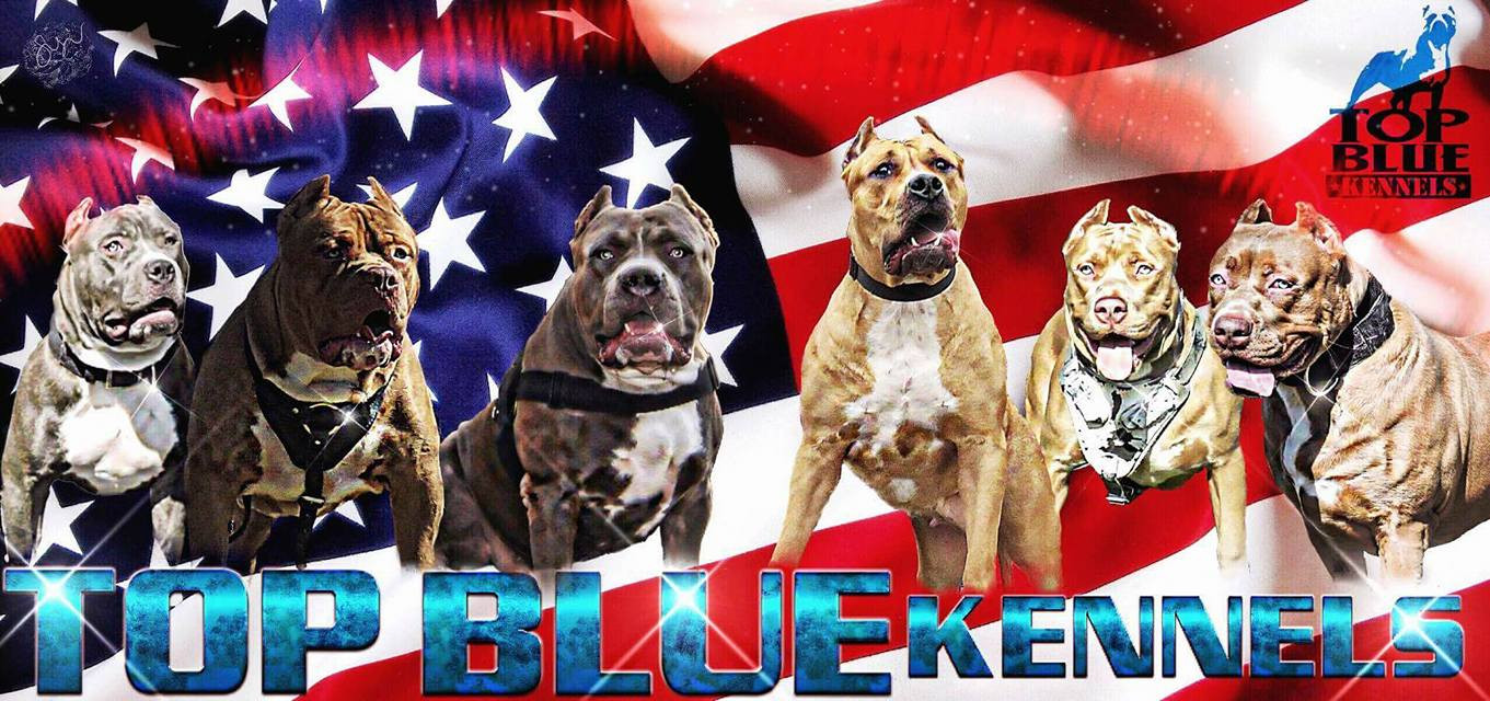 Game Pitbull Kennels In Tennessee