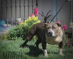 Tank x Addiction Daughter 1 year old