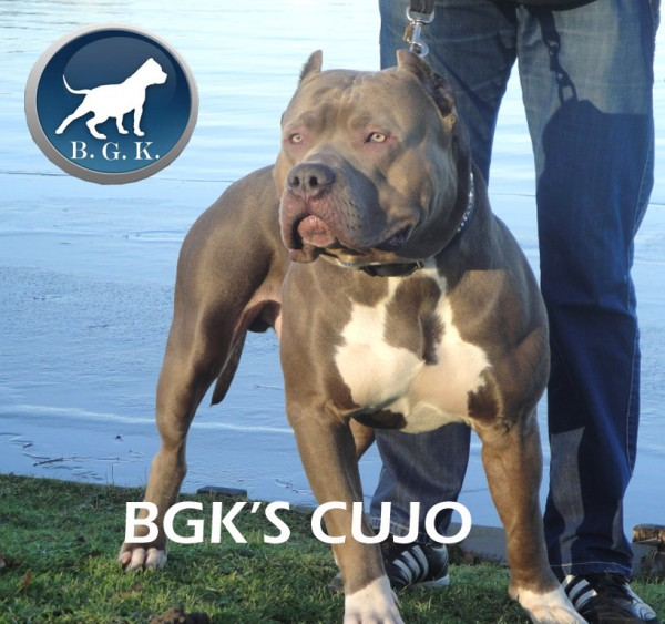 BGK'S Cujo