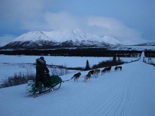 Alpine Creek Excursion Sled Dog Race