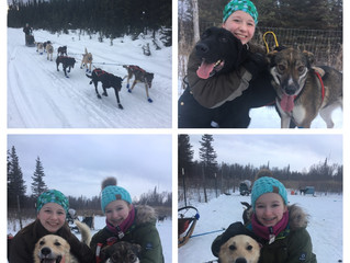 Tailwind Jr. Mushers and puppy team update