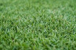 Platinum Grass