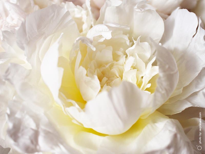 just_flowers_2019_1a.jpg