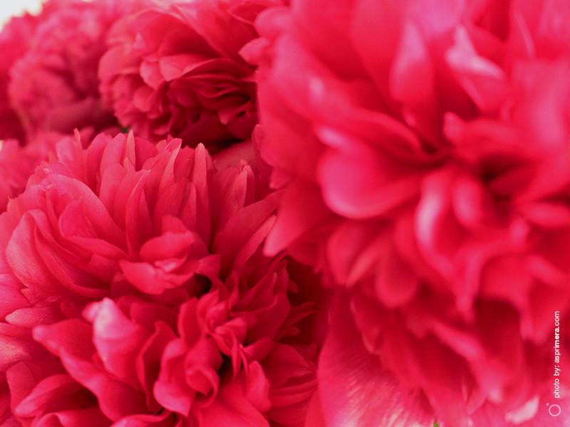 just_flowers_2019_1b.jpg
