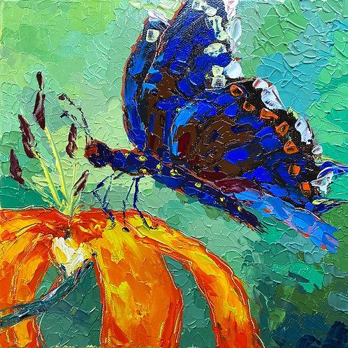 Fluttering beauty