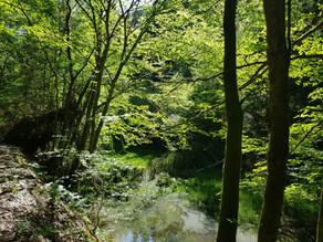 Heilende Natur - Was macht der Wald mit Psyche und Körper?