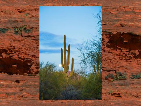 lunar cactus