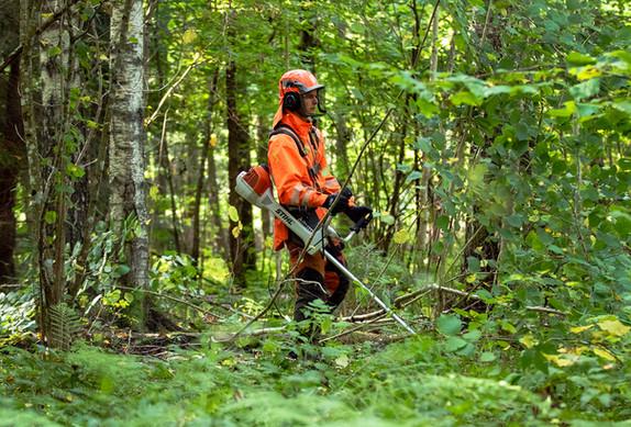 tradfallningen-skog.jpg