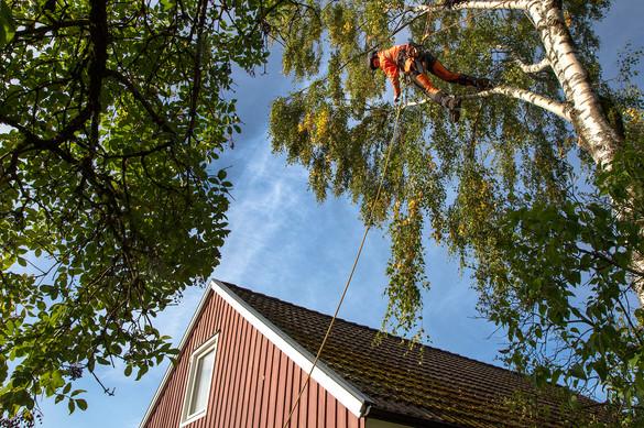 tradfallningen-träd2.jpg