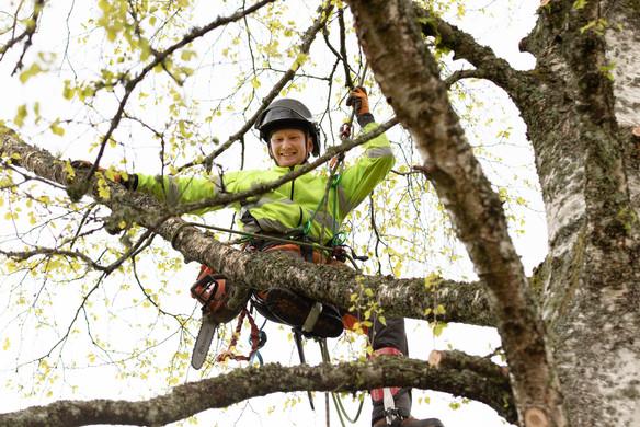 Tradfallningen-träd1.jpg