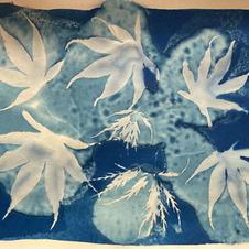 Wet cyanotype. acer leaves
