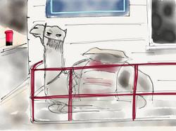 Kentish Town Camel