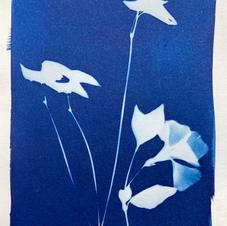 cyanotype 29. violet and leaves.jpg