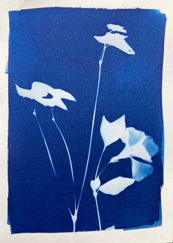 cyanotype 29. violet and leaves