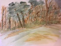 Graffham woods
