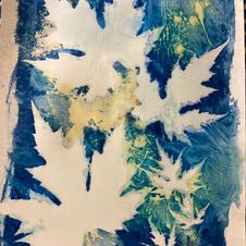 Cyanotype with turmeric