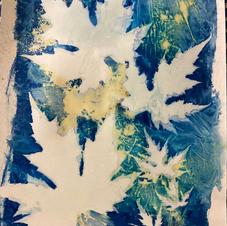 cyanotype turmeric1.jpg
