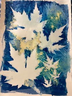 cyanotype turmeric1