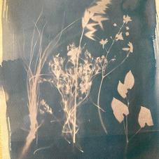 cyanotype tea toner 1.jpeg