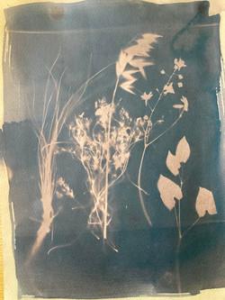 cyanotype tea toner 1
