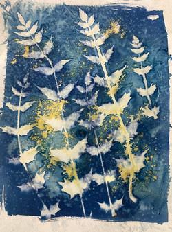wet cyanotype turmeric