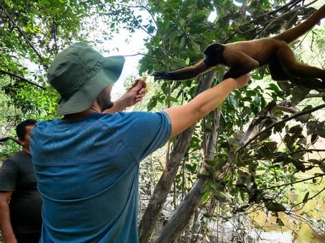Iquitos: Into the Jungle
