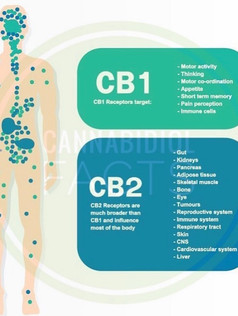 CB1 and B