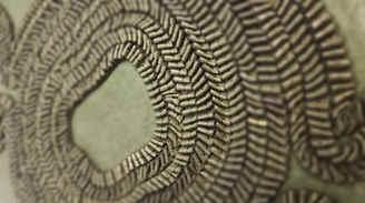 Frill geometrico