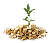 plant growing out of gold coins isolated