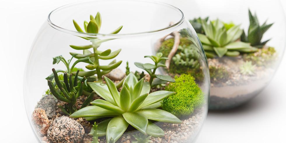 Winter Succulent Terrarium Workshop!