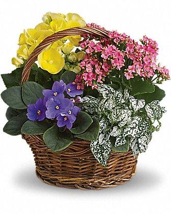 Petite Spring Basket