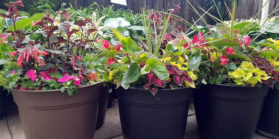 Virtual Workshop - Outdoor Patio Planters!