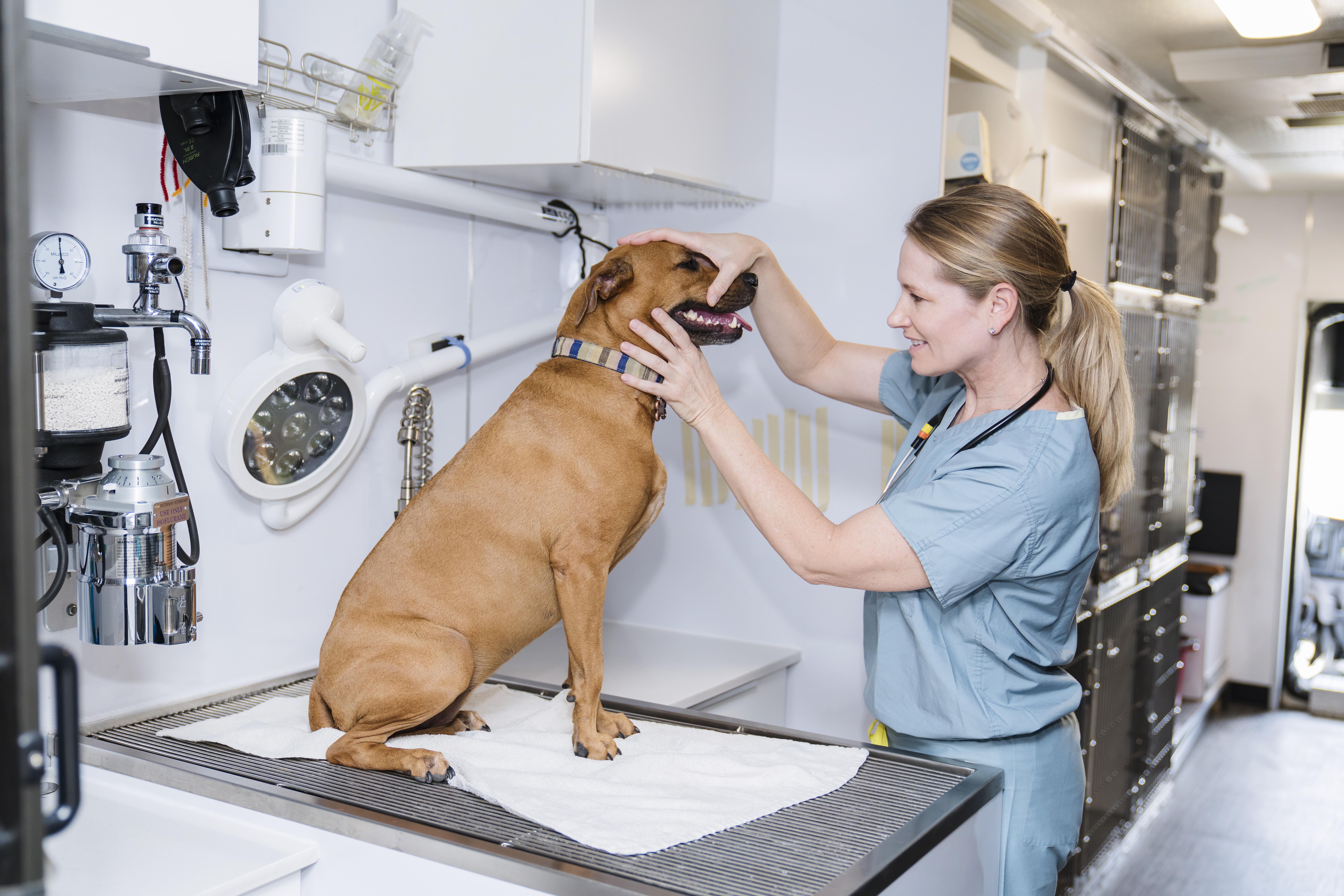 Affordable Pet Surgery  Phoenix  Dr  Kelly's Mobile Surgical Unit