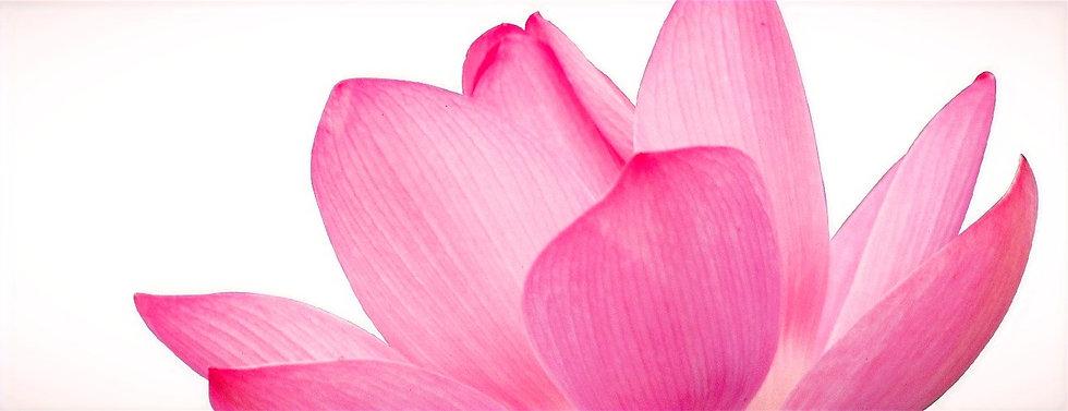 Pink Flower Petals_edited_edited.jpg