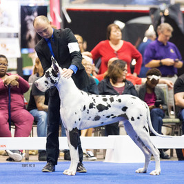 Otto - AKC National 2018.JPG