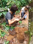 Jacimo and Franchi planting aya.jpg