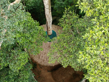 Treehouse Aerial