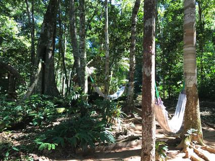 Hammock Trail