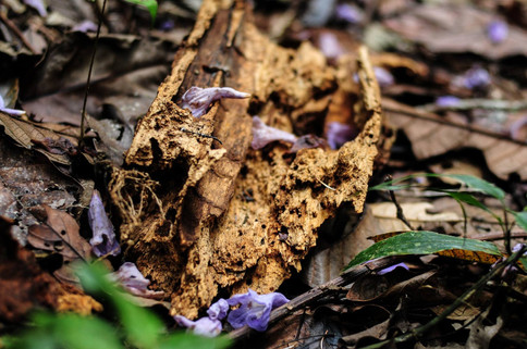 decomposing wood and flowers.jpg