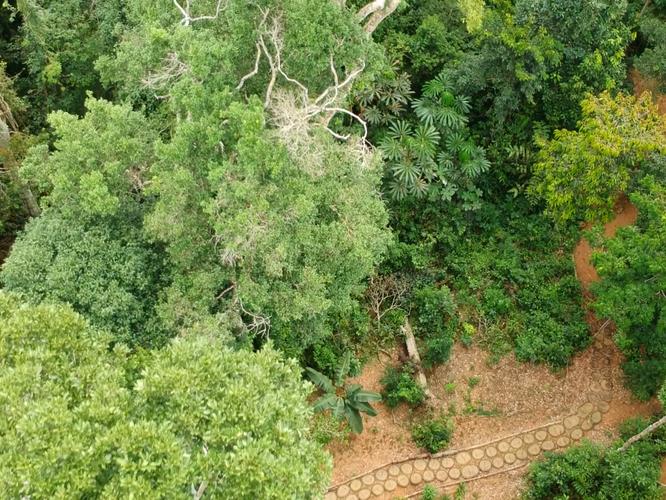 Aerial Maloca Path