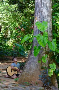 Sing to the Tree Spirits