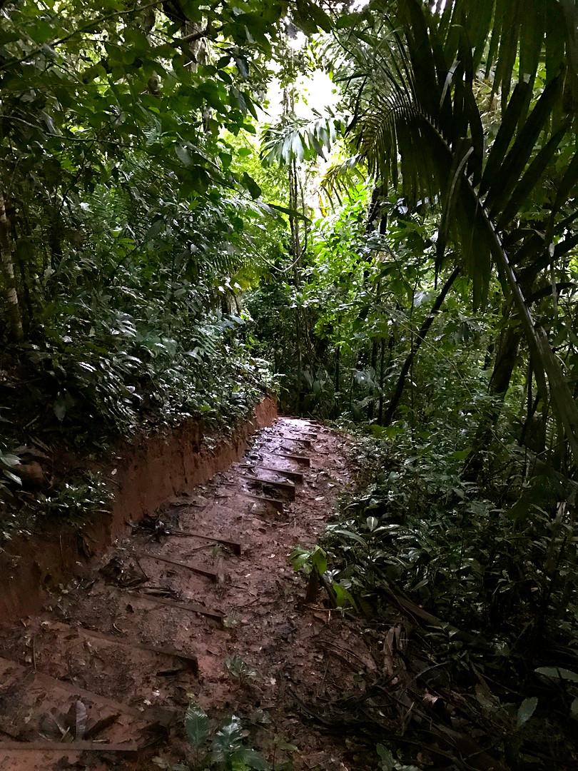 Earthen Stairway
