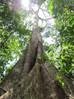 Ecology and Environmental Awareness