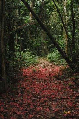 Lupuna Path