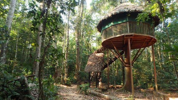 Treehouse 2