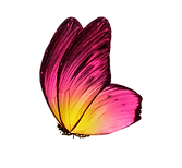 Color%20butterfly%2C%20isolated%20on%20w