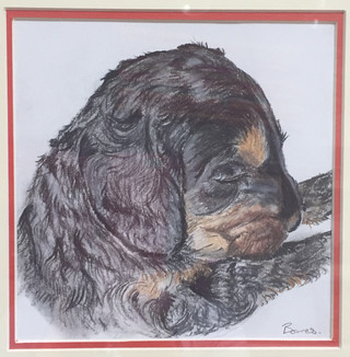 Puppy Darcey.jpg