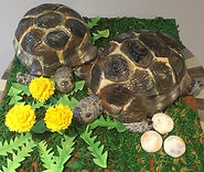 Tortoise Cake.jpg
