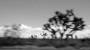 JOSHUA TREES AT SPEED